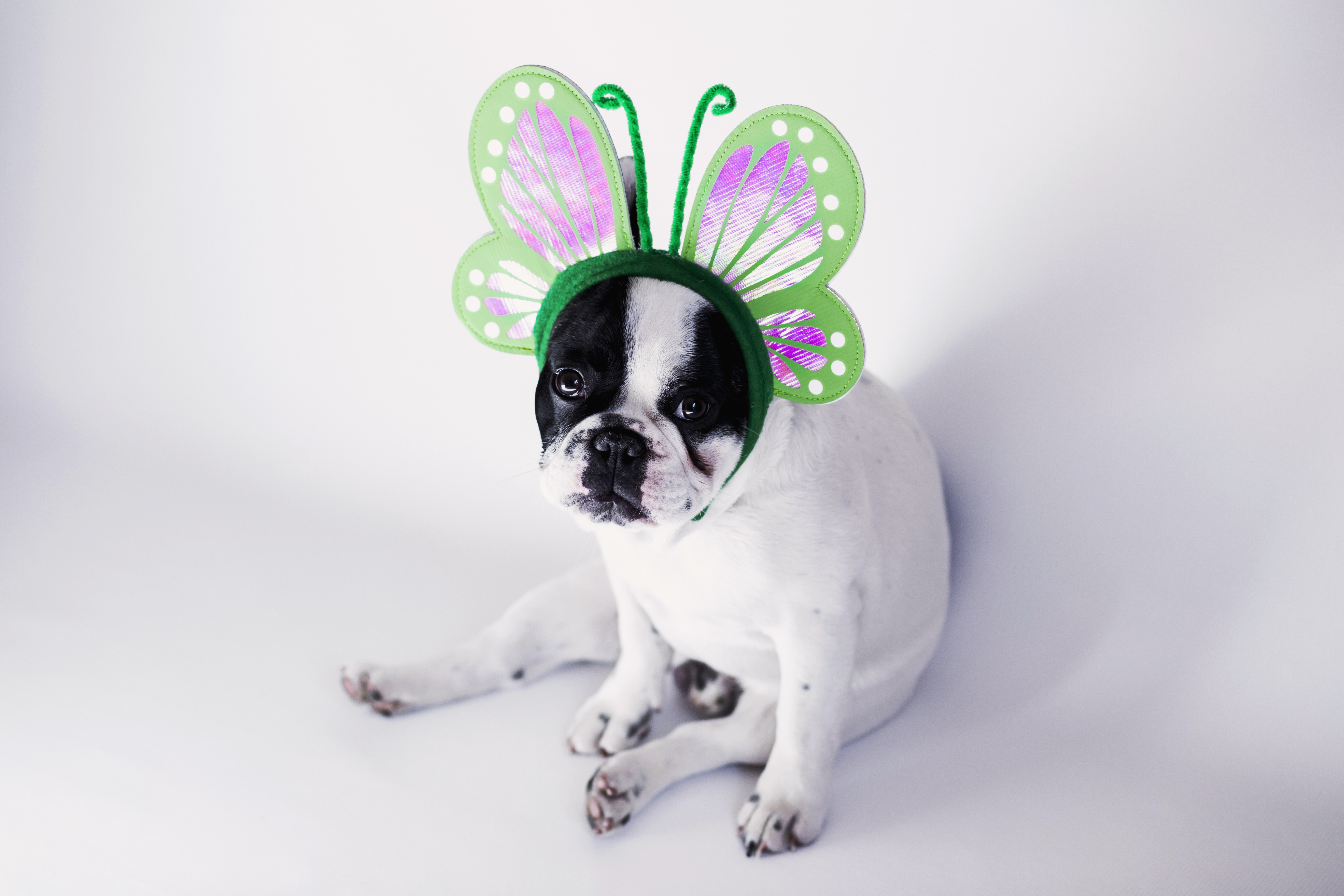 Halloween Events for Children & Pets